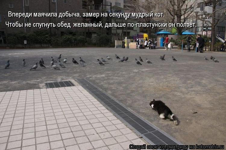 Котоматрица: Впереди маячила добыча, замер на секунду мудрый кот.  Чтобы не спугнуть обед  желанный, дальше по-пластунски он ползёт.