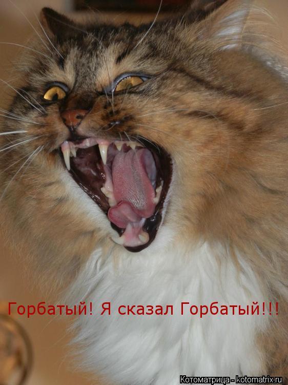 Котоматрица: Горбатый! Я сказал Горбатый!!!