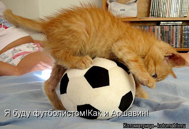 Котоматрица: Я буду футболистом!Как и Аршавин!