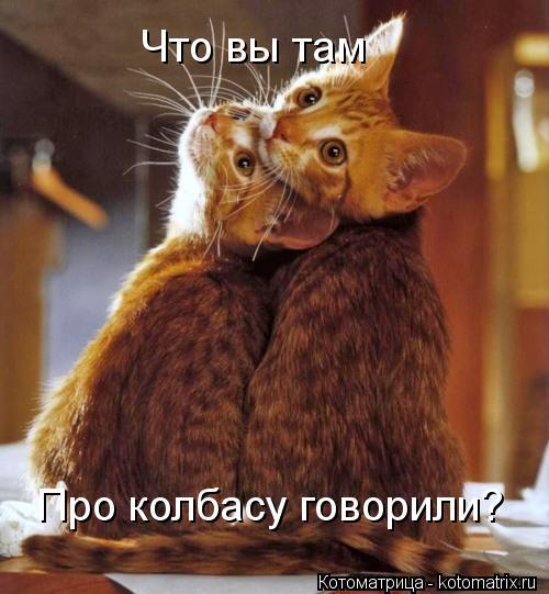 Котоматрица: Что вы там Про колбасу говорили?
