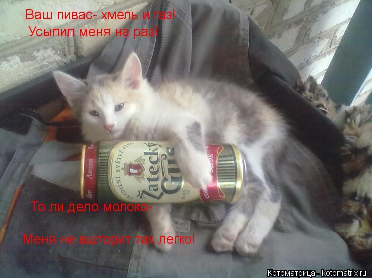 Котоматрица: Ваш пивас- хмель и газ! Усыпил меня на раз! То ли дело молоко- Меня не вшторит так легко!
