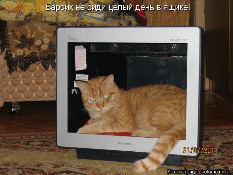 Котоматрица: Барсик не сиди целый день в ящике!