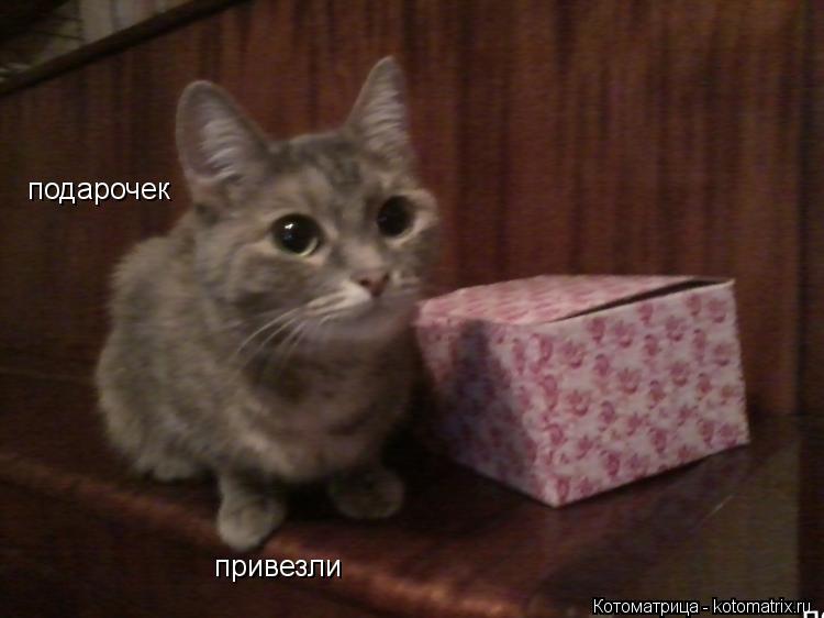 Котоматрица: подарочек привезли подарок котику подарок котику подарок котику