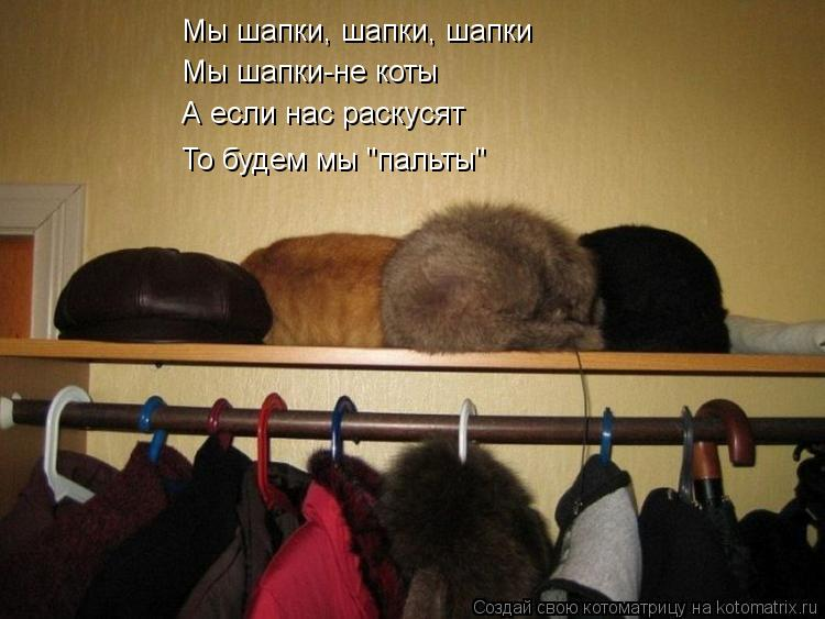"Котоматрица: Мы шапки, шапки, шапки Мы шапки-не коты А если нас раскусят То будем мы ""пальты"""