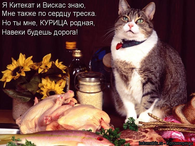 Котоматрица: Я Китекат и Вискас знаю, Мне также по сердцу треска. Но ты мне, КУРИЦА родная, Навеки будешь дорога!