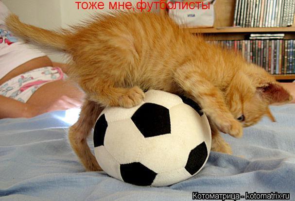 Котоматрица: тоже мне,футболисты