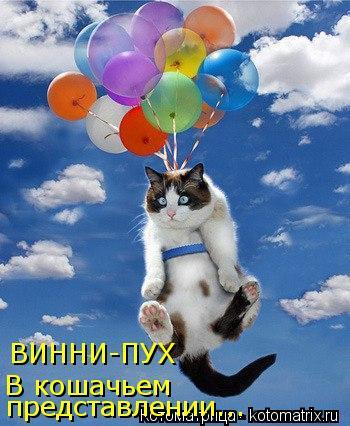 Котоматрица: ВИННИ-ПУХ В кошачьем  представлении...