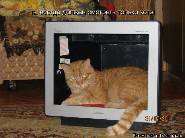Котоматрица: ты всегда должен смотреть только котэ!