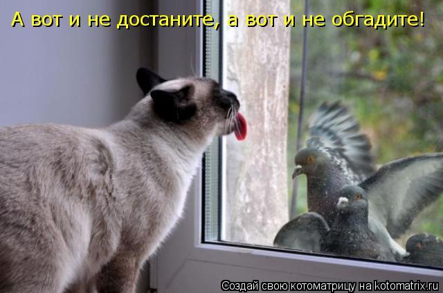 Котоматрица: А вот и не достаните, а вот и не обгадите!