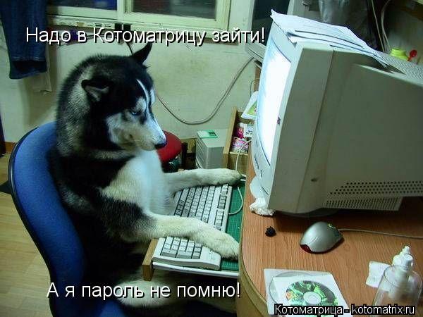 Котоматрица: Надо в Котоматрицу зайти! А я пароль не помню!