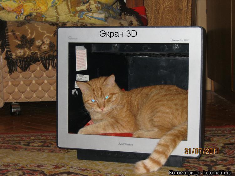 Котоматрица: Экран 3D