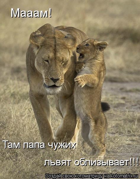 Котоматрица: Мааам! Там папа чужих львят облизывает!!!