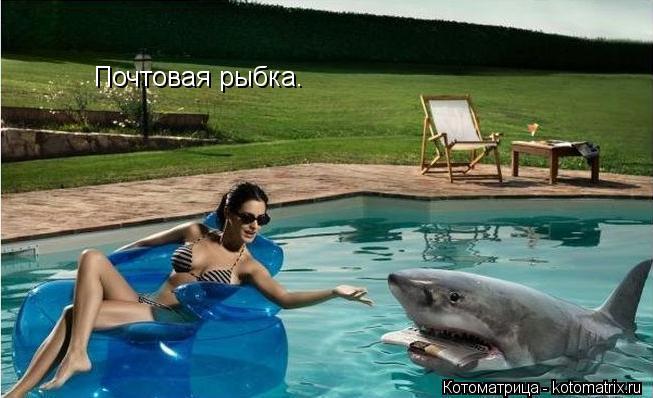 Котоматрица: Почтовая рыбка.