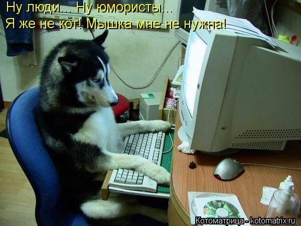 Котоматрица: Ну люди... Ну юмористы... Я же не кот! Мышка мне не нужна!