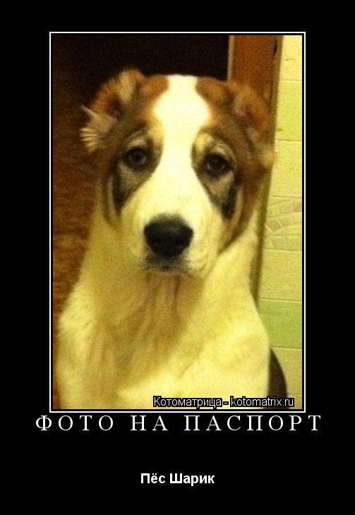 Котоматрица: ФОТО НА ПАСПОРТ Пёс Шарик