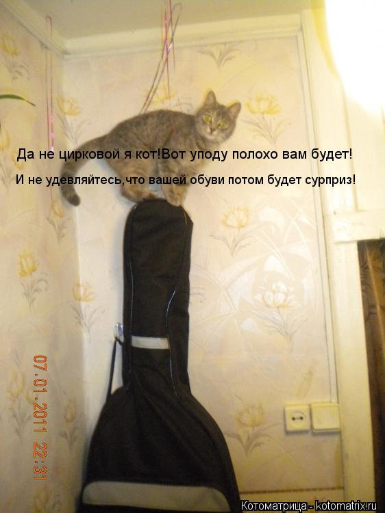 Котоматрица: Да не цирковой я кот!Вот уподу полохо вам будет! И не удевляйтесь,что вашей обуви потом будет сурприз!