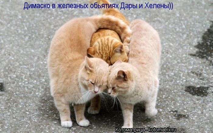 Котоматрица: Димаско в железных обьятиях Дары и Хелены))