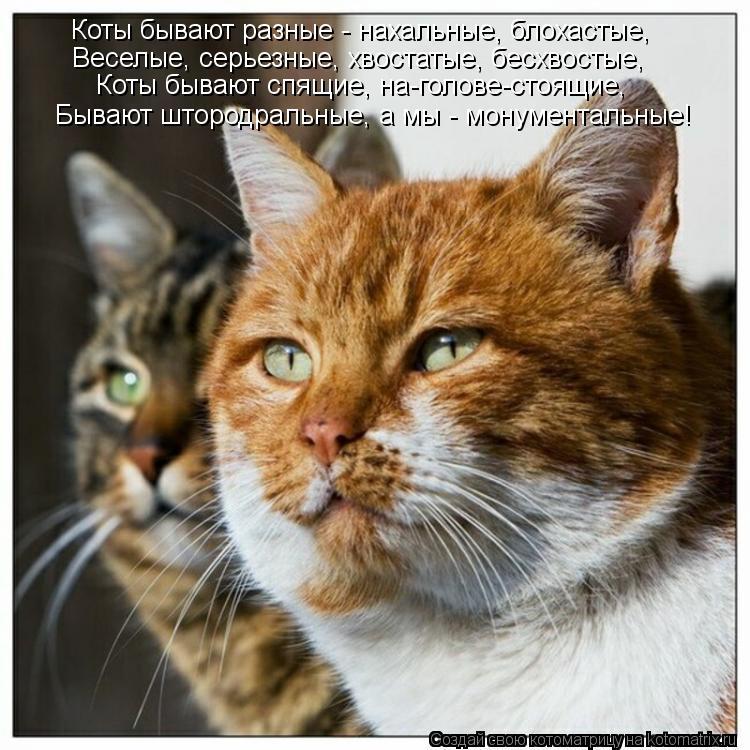 Котоматрица: Коты бывают разные - нахальные, блохастые, Веселые, серьезные, хвостатые, бесхвостые, Коты бывают спящие, на-голове-стоящие, Бывают штородра