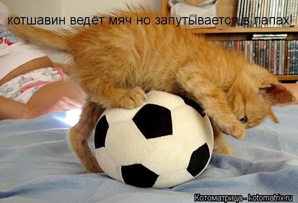 Котоматрица: котшавин ведёт мяч но запутывается в лапах!