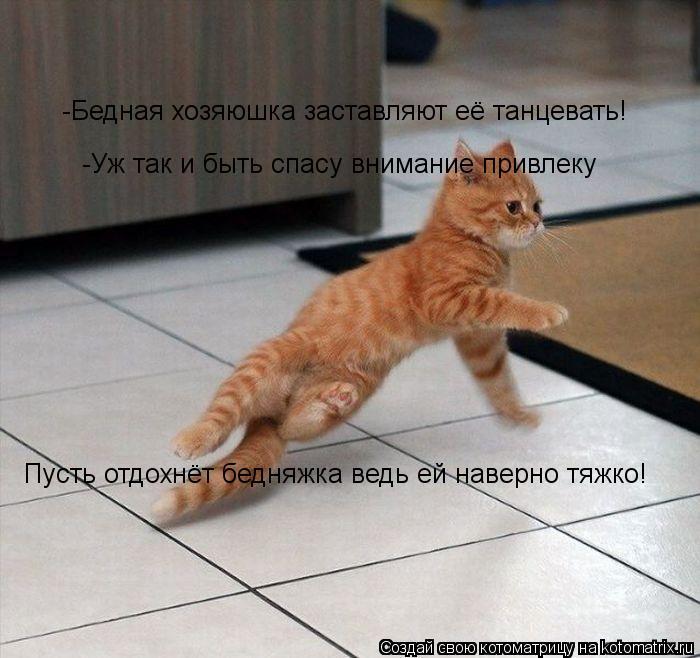 Котоматрица: -Бедная хозяюшка заставляют её танцевать! -Уж так и быть спасу внимание привлеку Пусть отдохнёт бедняжка ведь ей наверно тяжко!