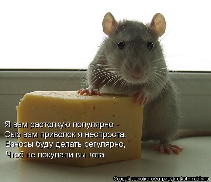 Котоматрица: Я вам растолкую популярно - Сыр вам приволок я неспроста. Взносы буду делать регулярно, Чтоб не покупали вы кота.