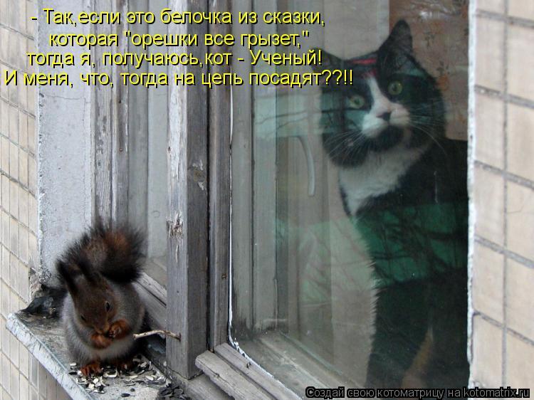 """Котоматрица: - Так,если это белочка из сказки, которая """"орешки все грызет,"""" тогда я, получаюсь,кот - Ученый!  И меня, что, тогда на цепь посадят??!!"""