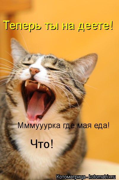 Котоматрица: Мммууурка где мая еда! Теперь ты на деете! Что!