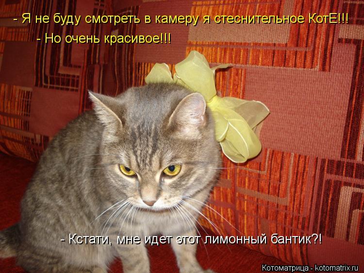 Котоматрица: - Кстати, мне идет этот лимонный бантик?! - Я не буду смотреть в камеру я стеснительное КотЕ!!!  - Но очень красивое!!!