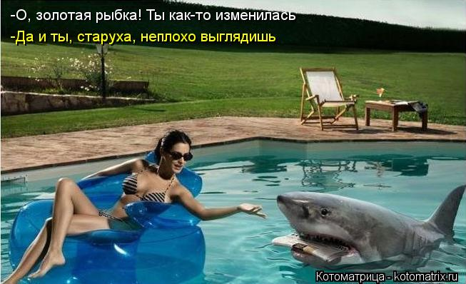 kotomatritsa_Jgy.jpg
