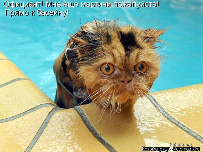 Котоматрица: Официант! Мне еще мартини пожалуйста! Прямо к басейну!
