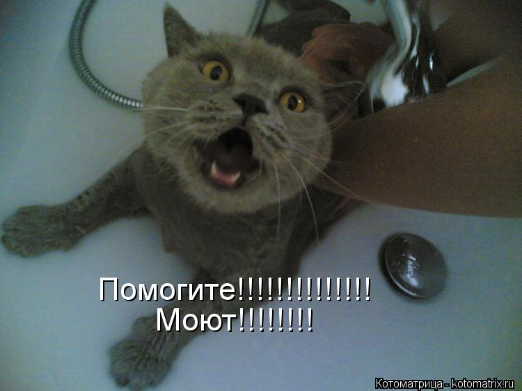 Котоматрица: Помогите!!!!!!!!!!!!!! Моют!!!!!!!!