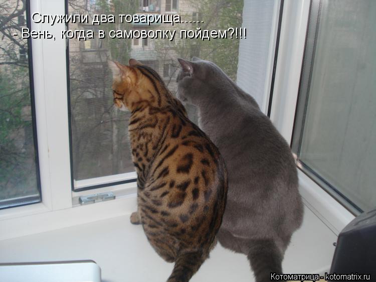 Котоматрица: Служили два товарища......        - Вень, когда в самоволку пойдем?!!!