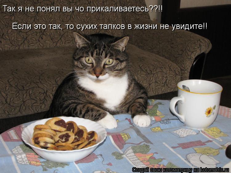 Котоматрица: Так я не понял вы чо прикаливаетесь??!!  Если это так, то сухих тапков в жизни не увидите!!