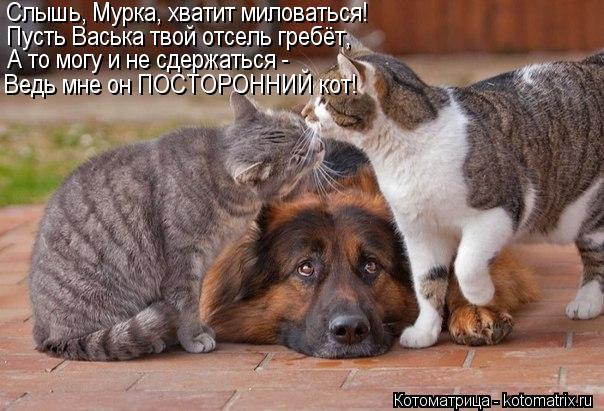 Котоматрица: Слышь, Мурка, хватит миловаться! Пусть Васька твой отсель гребёт,  А то могу и не сдержаться - Ведь мне он ПОСТОРОННИЙ кот!