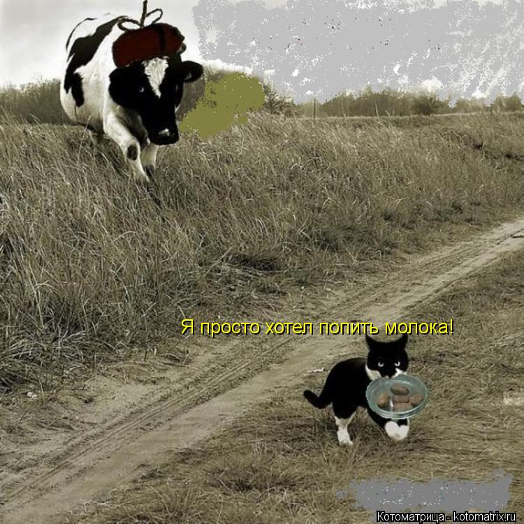 Котоматрица: Я просто хотел попить молока!