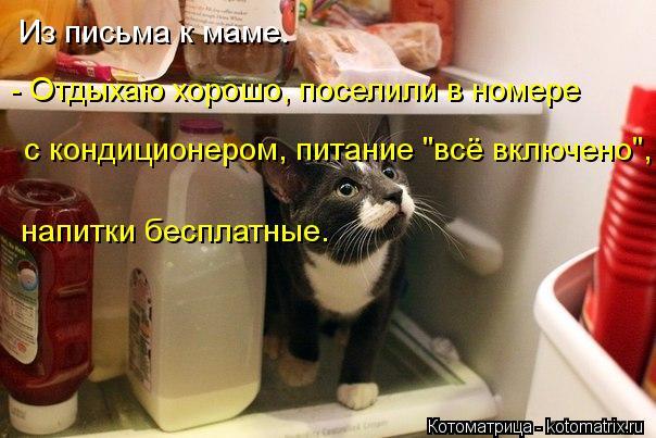 """Котоматрица: Из письма к маме. - Отдыхаю хорошо, поселили в номере  с кондиционером, питание """"всё включено"""", напитки бесплатные."""