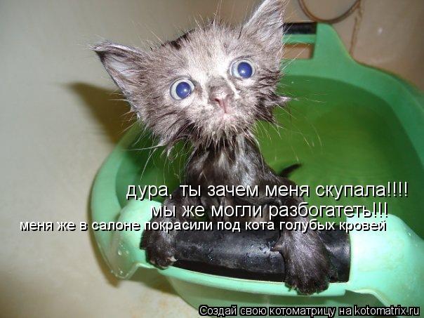 Котоматрица: дура, ты зачем меня скупала!!!!  мы же могли разбогатеть!!! меня же в салоне покрасили под кота голубых кровей меня же в салоне покрасили под ко