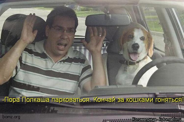 Котоматрица: -Пора Полкаша парковаться. Кончай за кошками гоняться! -Пора Полкаша парковаться. Кончай за кошками гоняться!