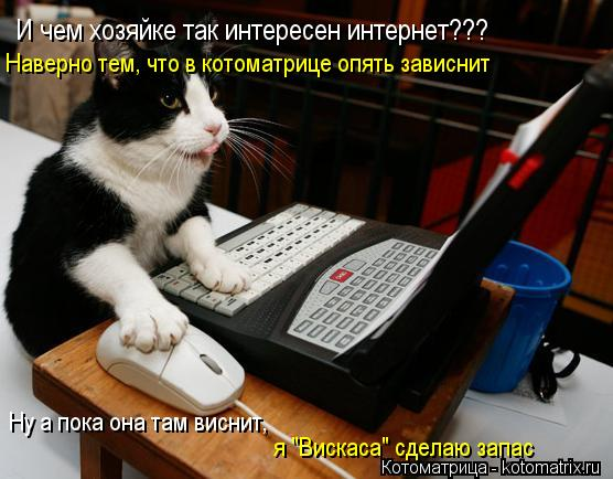 """Котоматрица: И чем хозяйке так интересен интернет??? Наверно тем, что в котоматрице опять зависнит Ну а пока она там виснит,  я """"Вискаса"""" сделаю запас"""
