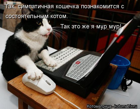 Котоматрица: Так, симпатичная кошечка познакомится с  состоятельным котом.  Так это же я мур мур!