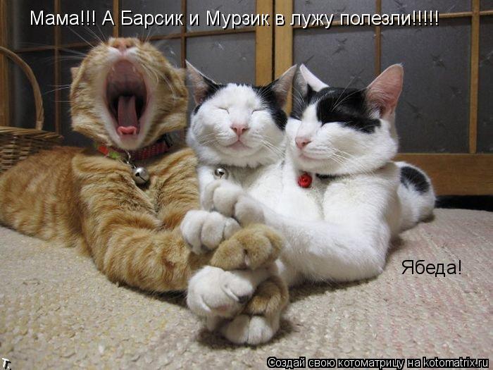 Котоматрица: Мама!!! А Барсик и Мурзик в лужу полезли!!!!! Ябеда!