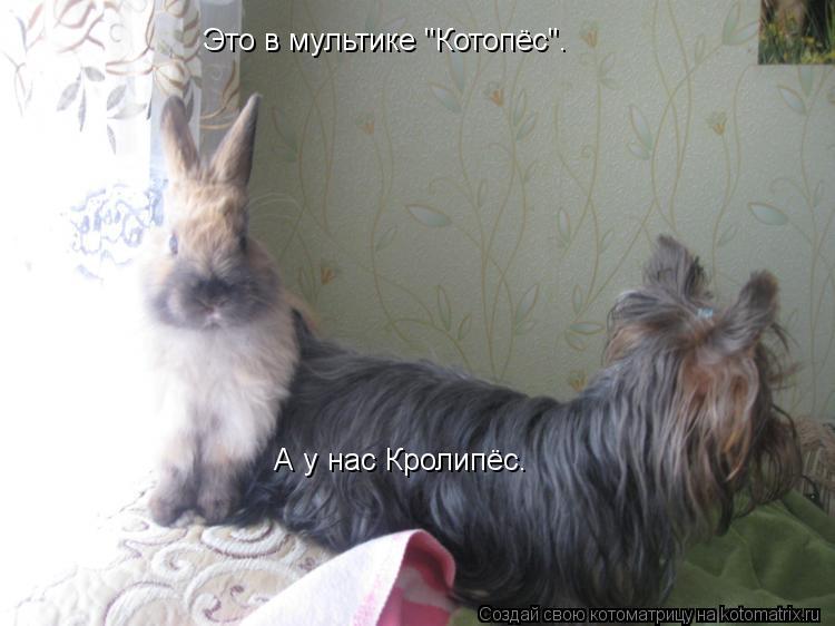 """Котоматрица: Это в мультике """"Котопёс"""". А у нас Кролипёс."""