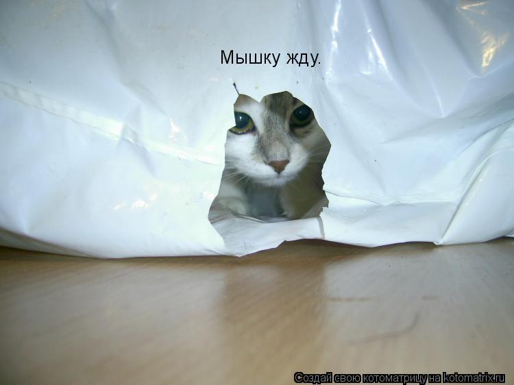 Котоматрица: Мышку жду.