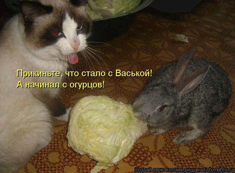 Котоматрица: Прикиньте, что стало с Васькой! А начинал с огурцов!
