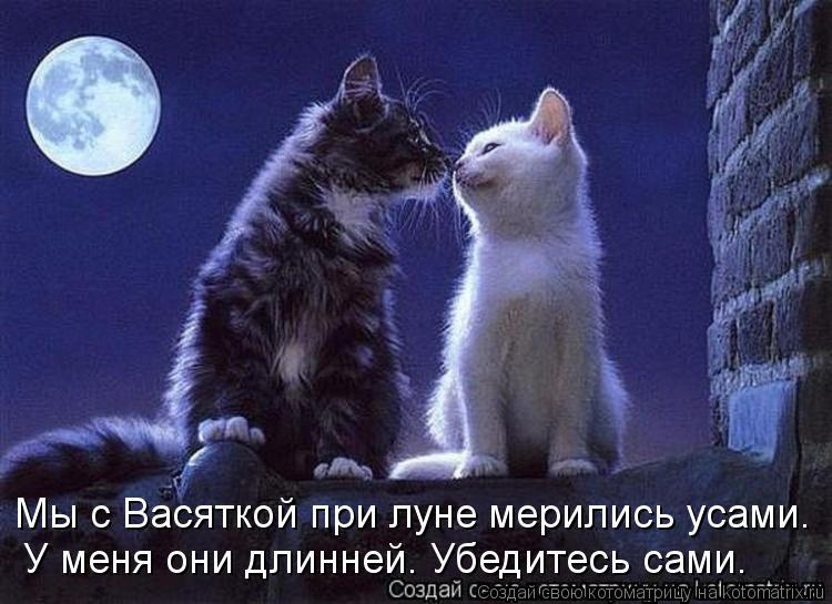 Котоматрица: Мы с Васяткой при луне мерились усами. У меня они длинней. Убедитесь сами.