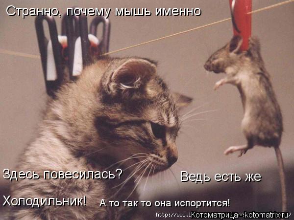 Котоматрица: Странно, почему мышь именно  Здесь повесилась? Ведь есть же  Холодильник! А то так то она испортится!