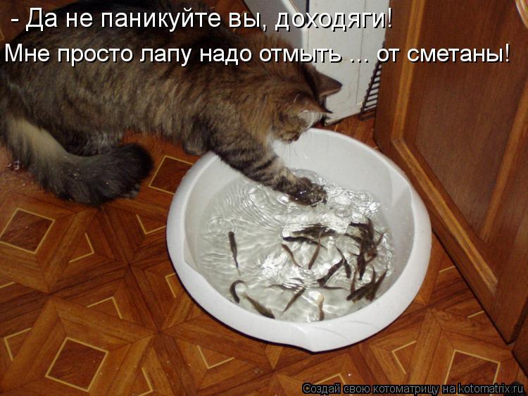 Котоматрица: - Да не паникуйте вы, доходяги! Мне просто лапу надо отмыть ... от сметаны!