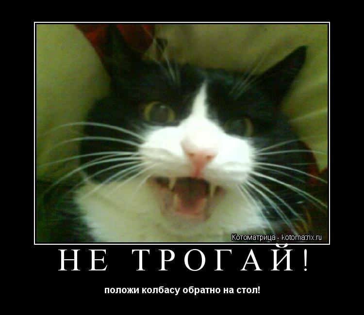Котоматрица: НЕ ТРОГАЙ! положи колбасу обратно на стол!