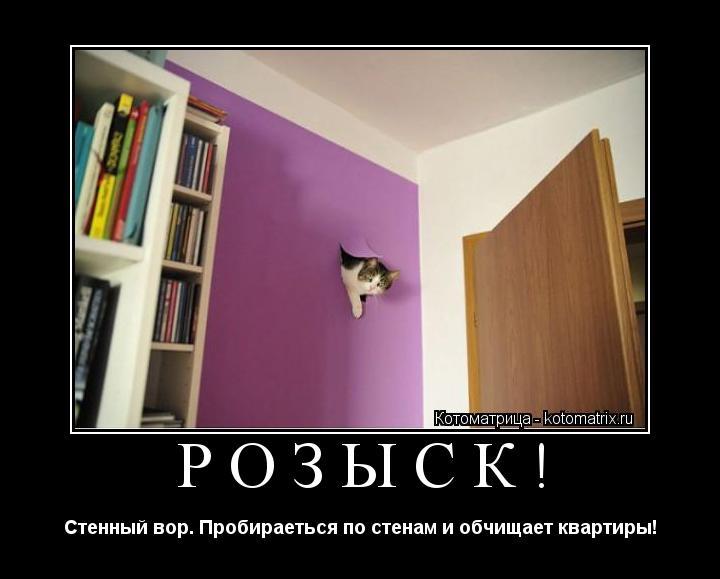 Котоматрица: РОЗЫСК! Стенный вор. Пробираеться по стенам и обчищает квартиры!