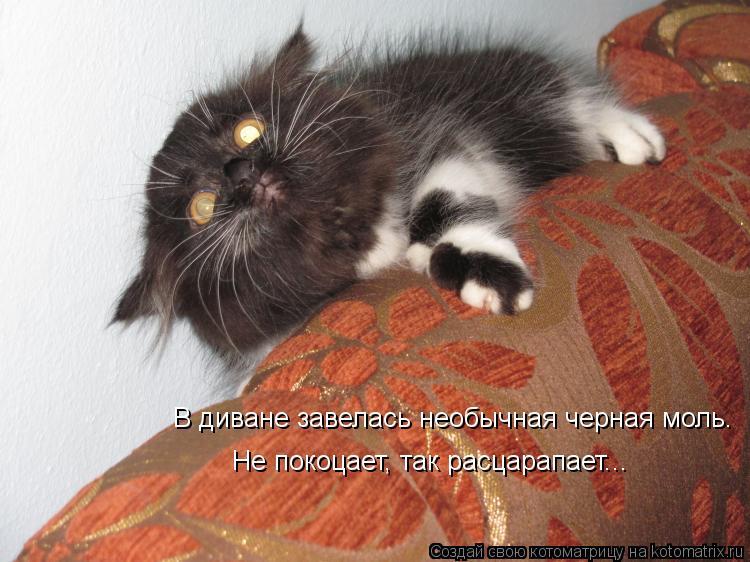 Котоматрица: В диване завелась необычная черная моль. Не покоцает, так расцарапает...